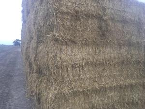 250 Rice Straw 450kg appox. 8x4x3 Bales mulched