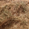 Good Clover & Vetch Hay For Sale in 8x4x3's