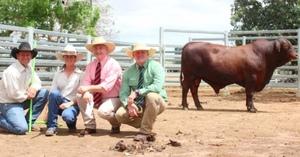Drensmaine Santa Bull to $44,000, Forest Park Santa bull to $22,000