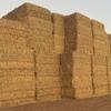 Oaten Hay 8x4x3 - 500 x 550 KG Approx Bales