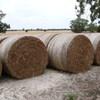 Shaftal Clover Hay 98 bales 520kg ave.