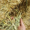 Oaten Hay 8x4x3 -200 x 500 KG Approx Bales  Delivered Price Sale Area