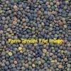 44mt Feed Lentils