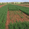Grain Growers - Have your say on RDE investment