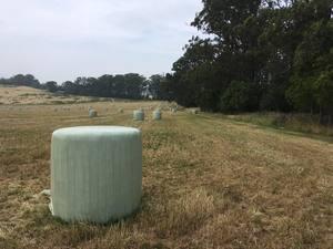 Italian Rye Grass silage