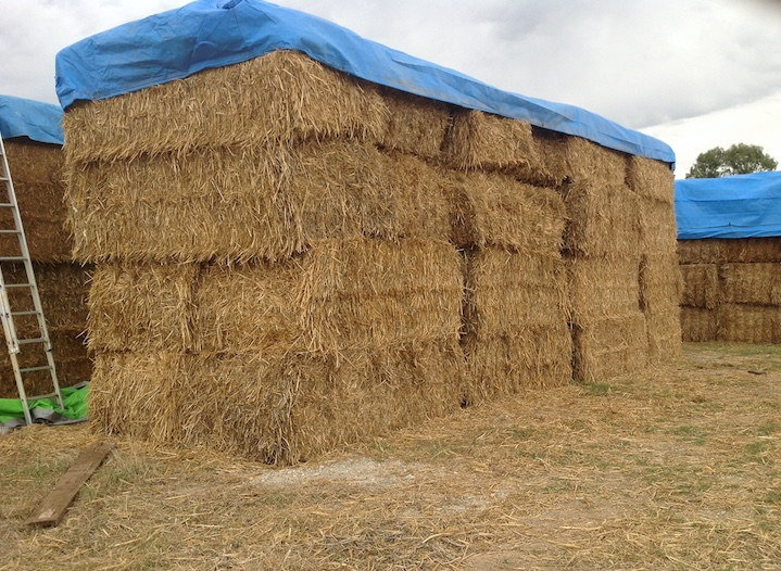 100 Bales of Header Trail Oat Straw | Hay & Fodder ...