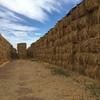 Oaten Hay 8x4x3 - 480 x 650 KG Approx Bales