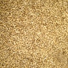 F 1 Barley x 132 m/t - Grain & Seed