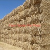 Straw ( Wheaten ) 8x4x3 - 1,500 x 350 KG Approx Bales