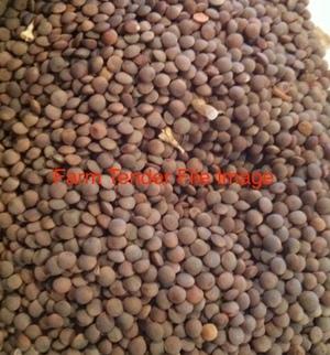 Feed lentils