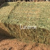 Lucerne Hay 8x4x3 -78 x 650 KG Approx Bales + Freight