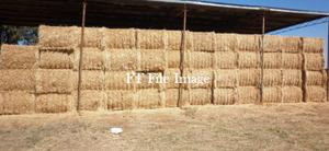 280mt Barley Hay For Sale