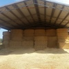 Barley Straw 8x4x3 Good Straw  & Shedded 1 x B/Double load, Delivered Price