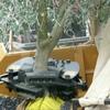 OCCA Olive harvester for sale