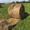 50 Rolls of Wheaten and Rye Hay