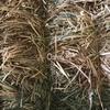 Oaten Hay 8x4x3 -750 x 500 KG Approx Bales & Shedded + Freight