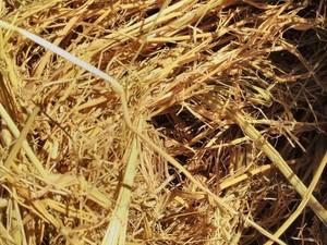 Old Season Rice Tailings 8x4x3 Bales