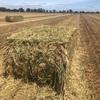 Wheaten/Oaten Hay