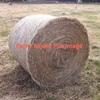 oaten hay