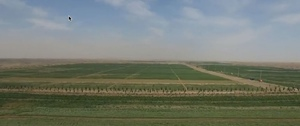Video - New technology turning desert sand into soil in China