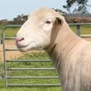 Bellevue, Elton Downs and Ulandi Ram Sale results