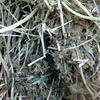 Clover Hay ( Barrel ) 8x4x3 - 300 x 590 KG Approx Bales & Shedded