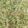 60/mt of Good Quality Pea Hay For Sale in 8x4x4 Bales