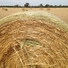 250 Rolls of Good Oaten Hay For Sale to be moved Prompt!! See test