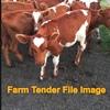 Friesian Bull Calves ( Bucket Reared)