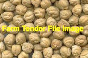 12-15mt Chickpea Seed