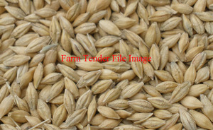 For Sale 300mt GA1 Barley Ex Farm Wallinduc