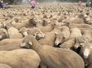 Best year for Mutton prices