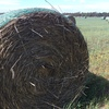 Wheat & Rye Grass Hay 5x4 Rolls