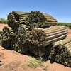 Treated pine posts