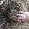 Clover Hay For Sale in 8x4x3's