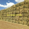 Vetch & Clover Hay 50/50% - 800 x 525 KG Approx Bales