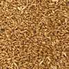 Wheat seed for sale - Naparoo awnless