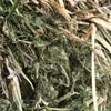 Clover Hay ( Sarva Snail Clover ) 8x4x3 400 x 600 KG Approlx Bales