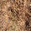 Vetch Hay  8X4X3- 600 x 670 Kg Approx Bales