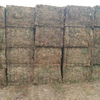 Vetch Hay 8x4x3 -250 x 650 KG Approx Bales Stacked & Capped.