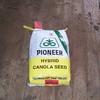 Pioneer hybrid canola seed 46Y78cl