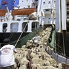 Injunction threat for Live Export addressed - Littleproud