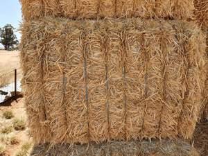 500 m/t of Header Trailed Barley Straw 600+ Kg Bales