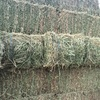 2000 x Small Squares of Lucerne Horse Quality