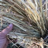 Moby Barley Hay Rolls For Sale - Old Season