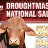 Droughtmaster National Bull sale result - Day 1