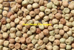 WANTED Seconds or damaged Peas 2-3m/t