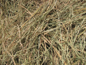 Rice Straw 8x4x3 - Hy-Si Inoculated at baling. 420-450kg bales.