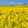 GRDC Scholorship recipient to focus on Canola