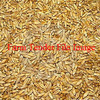 WANTED Oats or Barley